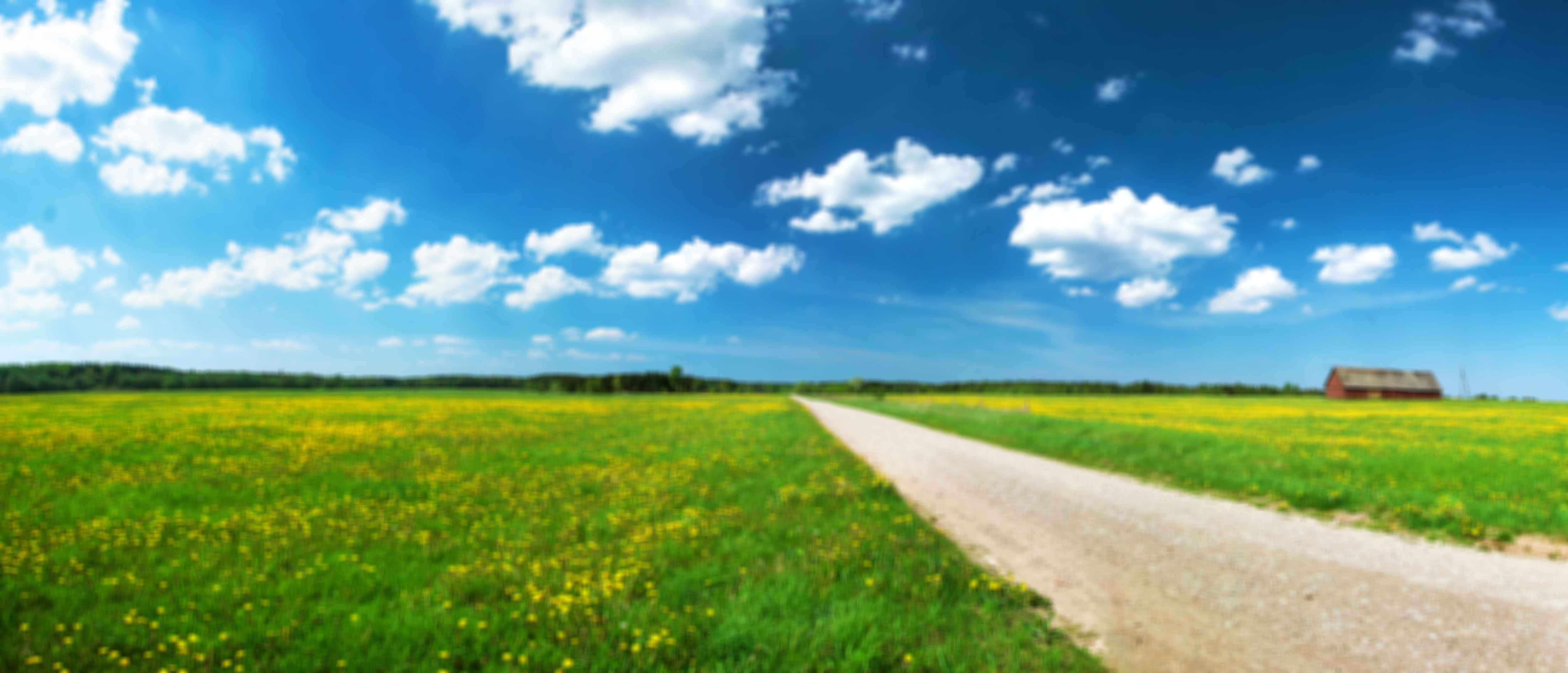 blurred background of a country road through a flowering field with blue skies